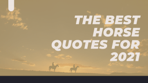 best horse Quotes for 2021