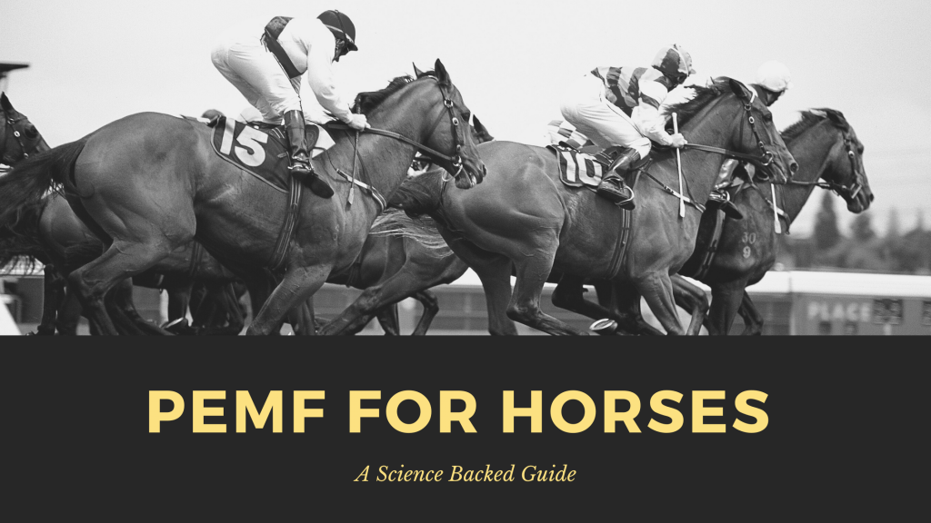 pemf for horses - a science backed guide