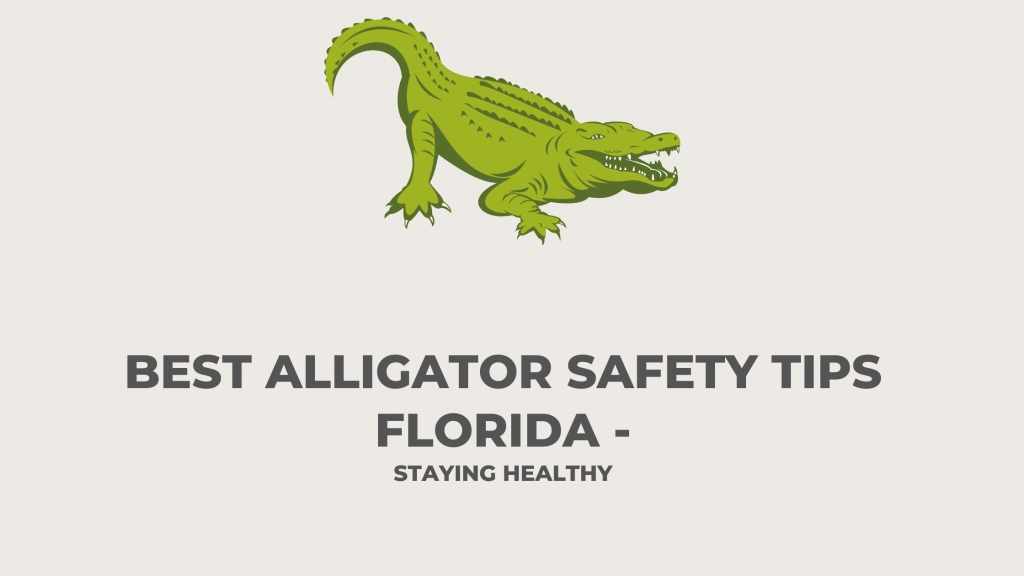 best alligatore safety tips florida to stay healthy
